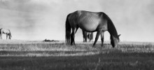 Herbivore Nutrition and Spring Pasture